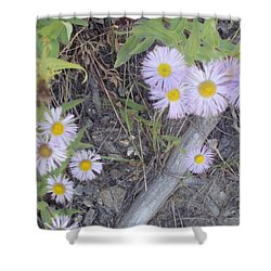 Shower Curtain featuring the photograph White In The Wild by Fortunate Findings Shirley Dickerson