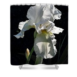 White Iris In The Morning Shower Curtain