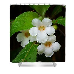 Shower Curtain featuring the photograph White Jungle Wildflower by Blair Wainman
