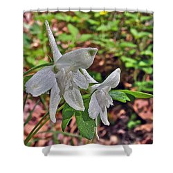 White Larkspur On Rock Spring Trail Near Natchez Trace Parkway-alabama Shower Curtain by Ruth Hager