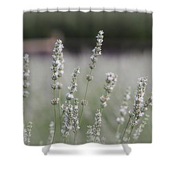 White Lavender Shower Curtain by Lynn Sprowl