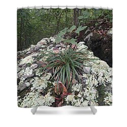 White Lichen Shower Curtain