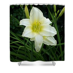 White Lily Shower Curtain by Catherine Gagne