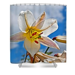 White Lily Flower Against Blue Sky Art Prints Shower Curtain