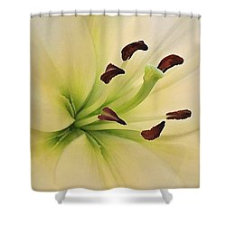 White Lily Pp-6 Shower Curtain