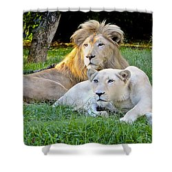 White Lion And Lioness Shower Curtain by Venetia Featherstone-Witty