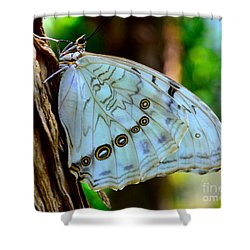 White Morpho Butterfly Shower Curtain by AnnaJo Vahle