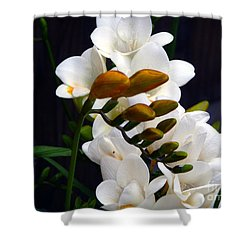 Blooms In Spring Shower Curtain