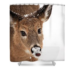White On The Nose Shower Curtain by Karol Livote
