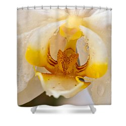 White Orchid Center Shower Curtain