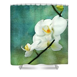 White Orchids Shower Curtain by Darren Fisher