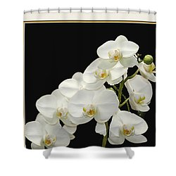 White Orchids II Shower Curtain by Tom Prendergast