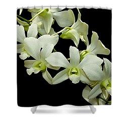 White Orchids Shower Curtain by Swank Photography