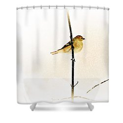 White Out Conditions Shower Curtain by Barbara S Nickerson