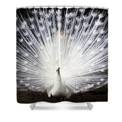 White Peacock Shower Curtain by Daniel Precht