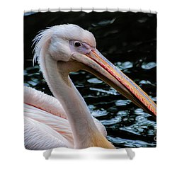 White Pelican Shower Curtain by Hannes Cmarits