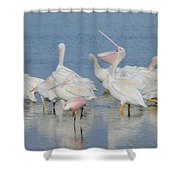 Shower Curtain featuring the photograph White Pelicans And Roseate Spoonbills by Bradford Martin