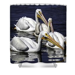White Pelicans Fishing Shower Curtain