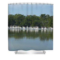 Shower Curtain featuring the photograph White Pelicans by Robert Nickologianis
