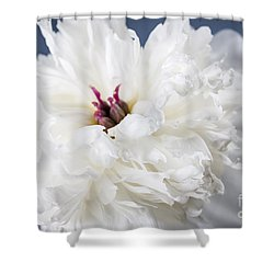 White Peony Flower  Shower Curtain by Elena Elisseeva