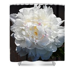 White Peony Shower Curtain by Tine Nordbred