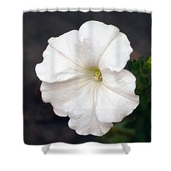 White Petunia Square Shower Curtain by Sandi OReilly