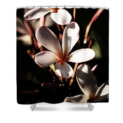 Shower Curtain featuring the photograph White Plumeria by Angela DeFrias