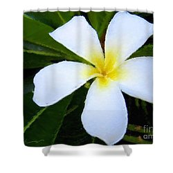 Shower Curtain featuring the mixed media White Plumeria by Anthony Fishburne