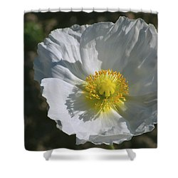 Shower Curtain featuring the photograph White Poppy by Rima Biswas