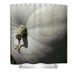 Shower Curtain featuring the photograph White Pumpkin by Caryl J Bohn