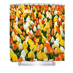 White Orange And Yellow Tulips Shower Curtain by Menachem Ganon