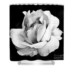 White Rose Shower Curtain