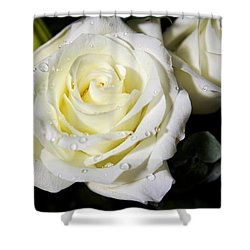 White Rose Shower Curtain by Dave Files