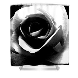 White Rose Shower Curtain by Nina Ficur Feenan