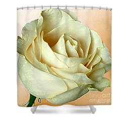 Shower Curtain featuring the photograph White Rose On Sepia by Nina Silver