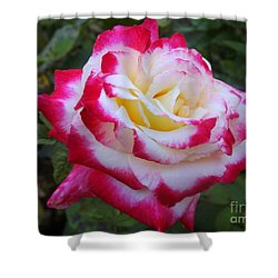 White Rose With Pink Texture Hybrid Shower Curtain