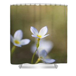 White Serenity Shower Curtain by Neal Eslinger