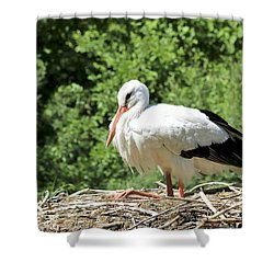 Shower Curtain featuring the photograph White Stork  by Teresa Zieba