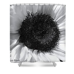 Shower Curtain featuring the photograph White Sunflower by Jeannie Rhode