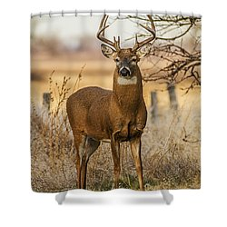 White-tail Buck Shower Curtain by Rob Graham