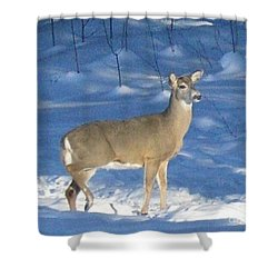 Shower Curtain featuring the photograph White Tail Deer by Brenda Brown