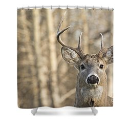 White-tailed Buck Shower Curtain