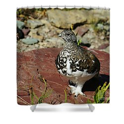 Shower Curtain featuring the photograph White-tailed Ptarmigan by Sue Smith