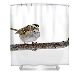 White-throated Sparrow Shower Curtain