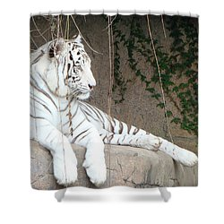 White Tiger Resting Shower Curtain
