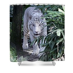 Shower Curtain featuring the photograph White Tiger  by Shoal Hollingsworth