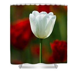 White Tulip - Featured 3 Shower Curtain by Alexander Senin