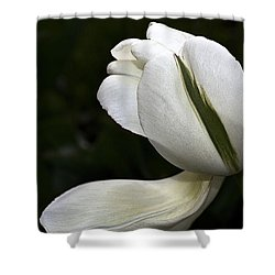 Shower Curtain featuring the photograph White Tulip by Nadalyn Larsen