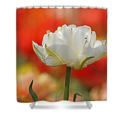 White Tulip Weisse Gefuellte Tulpe Shower Curtain