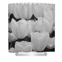 White Tulips B/w Shower Curtain by Jennifer Ancker